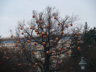 Dárky rostly na stromech